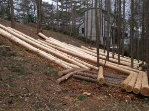 軽井沢町三井の森 伐採
