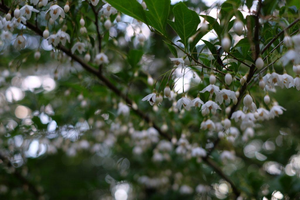 軽井沢の木