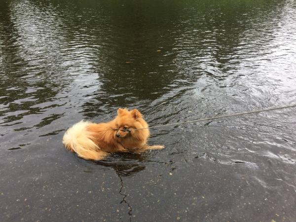 軽井沢で犬のいる暮らし