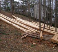 敷地内で伐採した木を建築に活かせます。